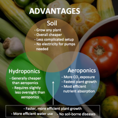 Hydroponic-Advantages