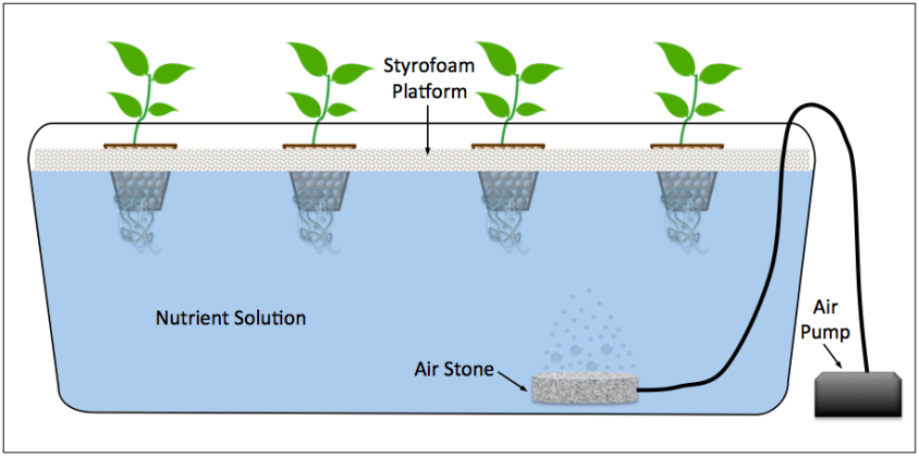 Deepwater Culture Setup is different from the Kratky Method