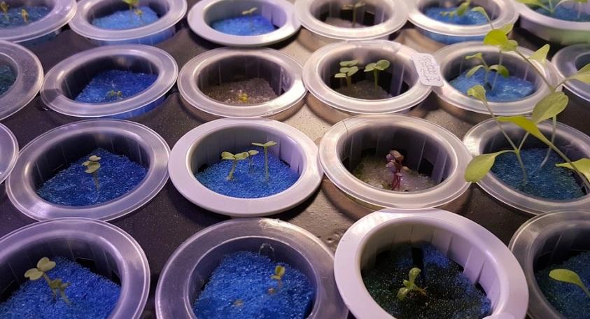 hydroponics2