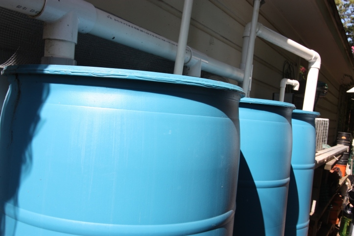 rainwater-harvest-collection-barrels